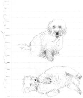 Jingo Sketch
