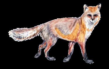 20171022 Fox